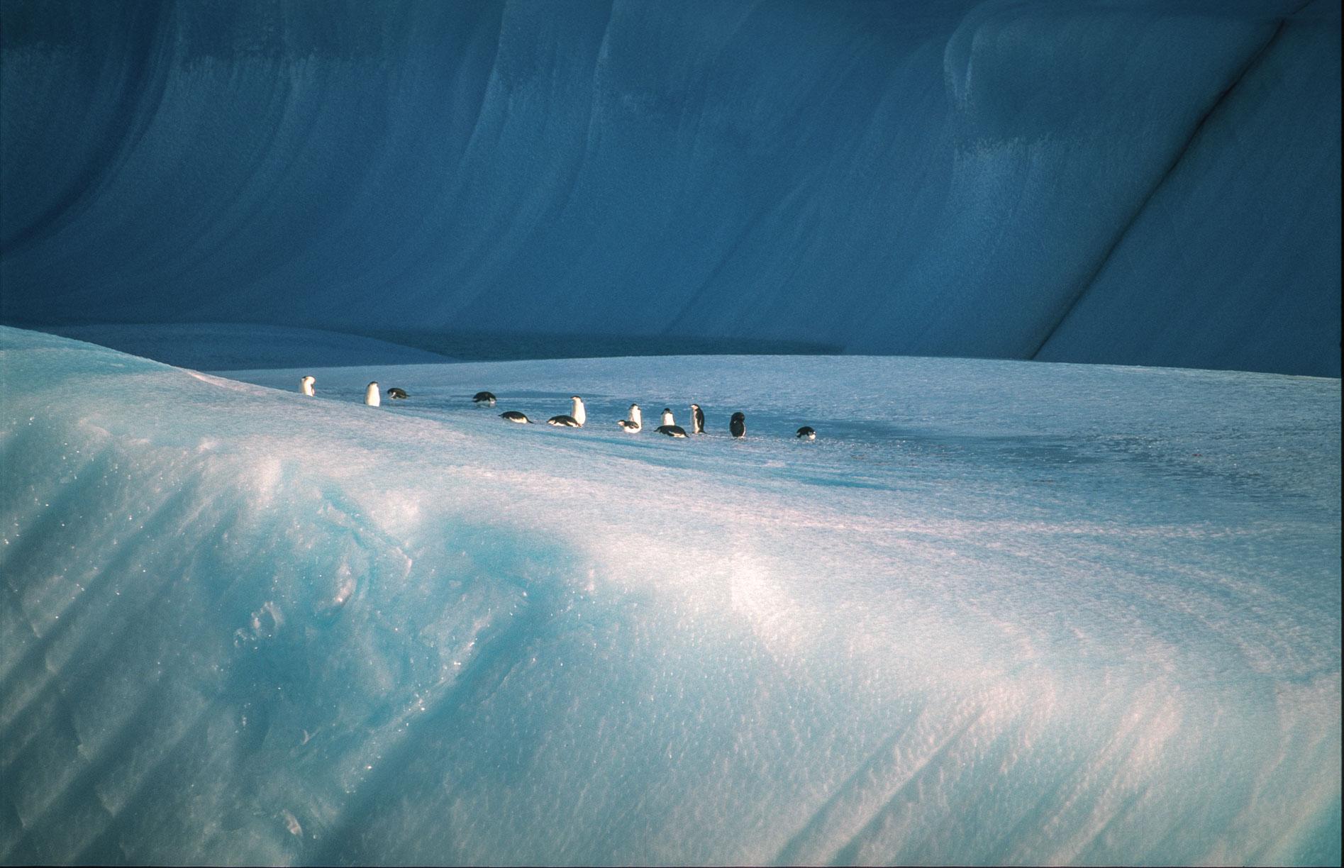 pinguineeis15.jpg