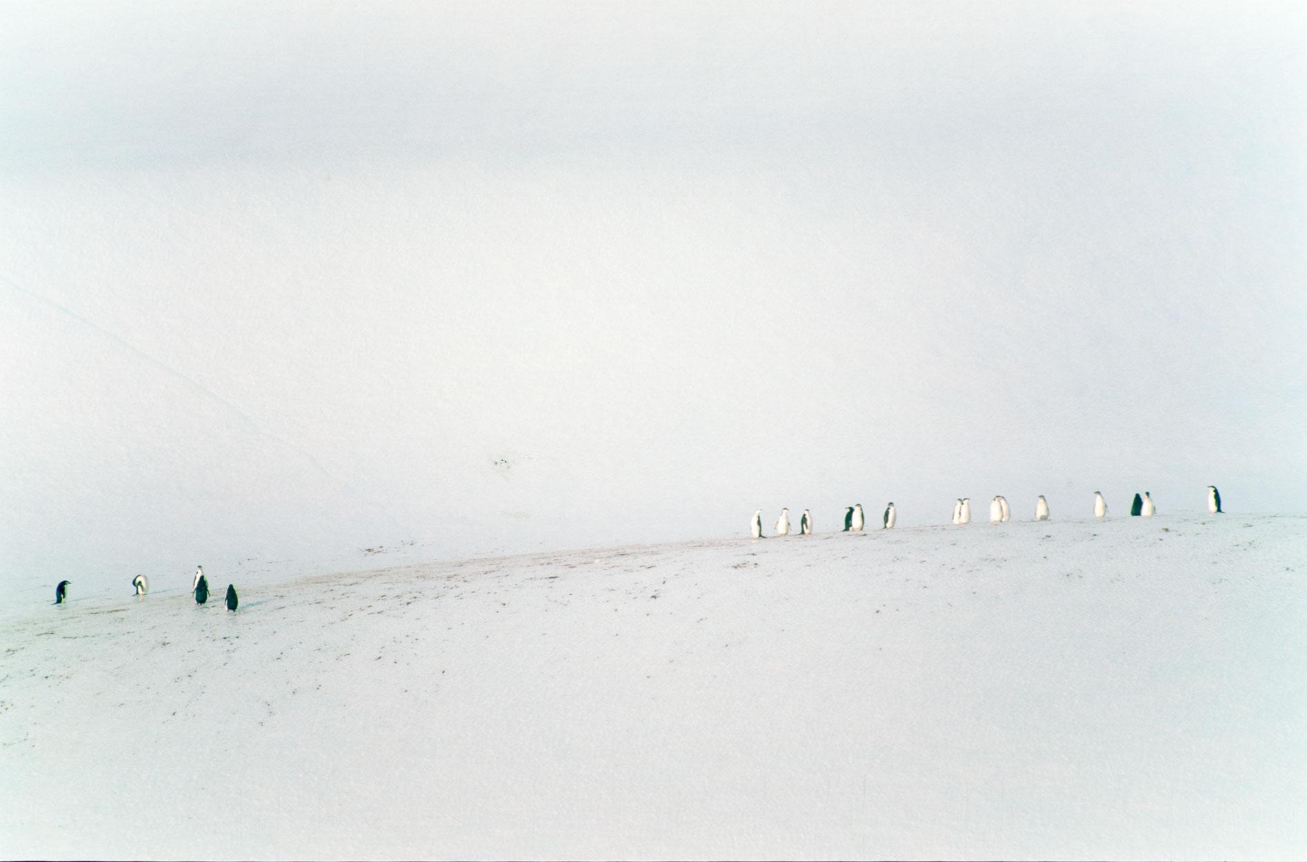 pinguineeis7.jpg