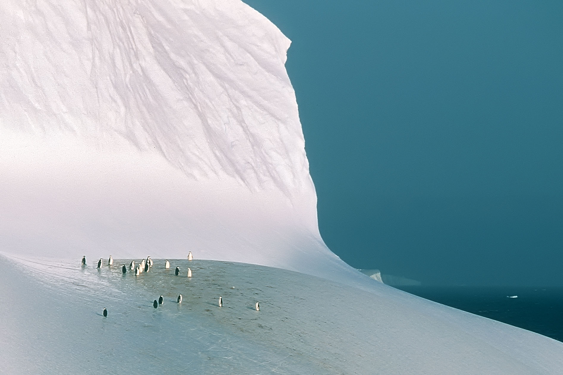 pinguineeis8b.jpg