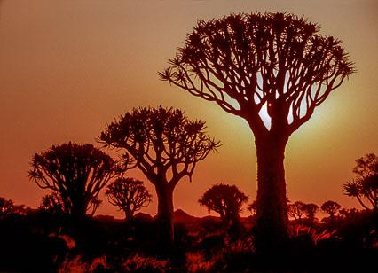Namibia--2-2.jpg