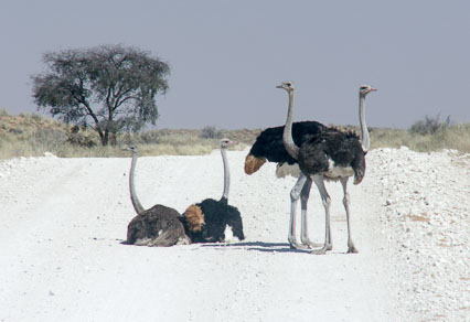 Namibia-2006153.jpg