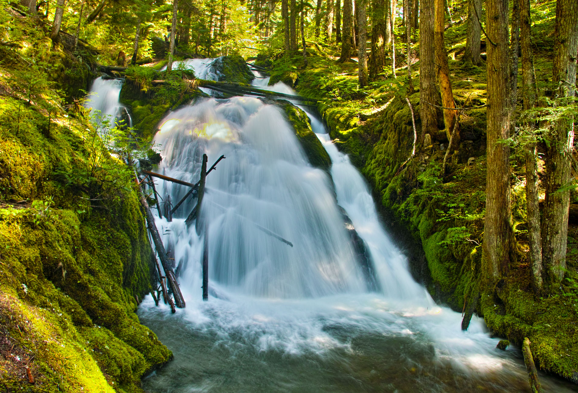 Washington_Oregon_SD-8129.jpg