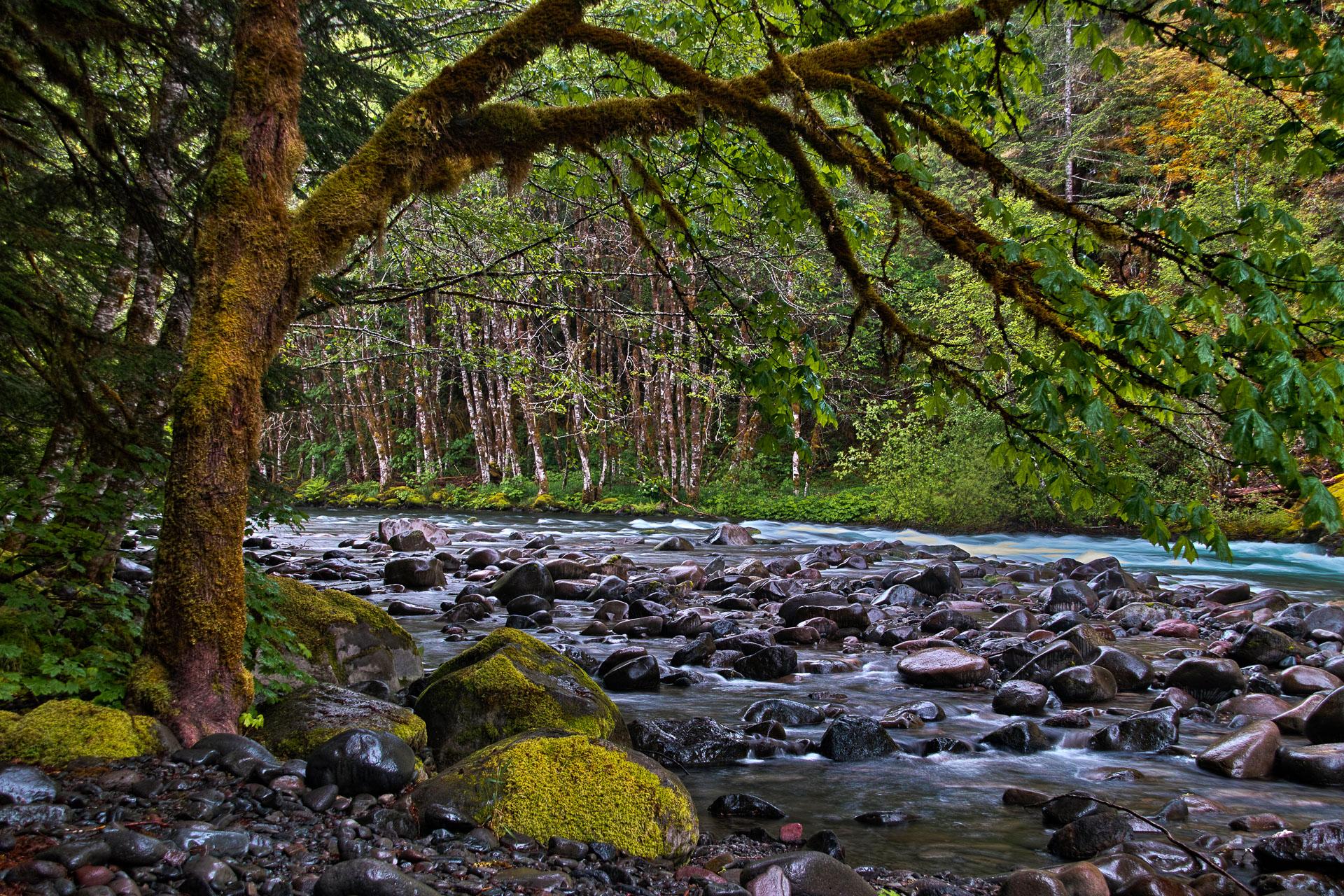 Washington_Oregon_SD-8292.jpg
