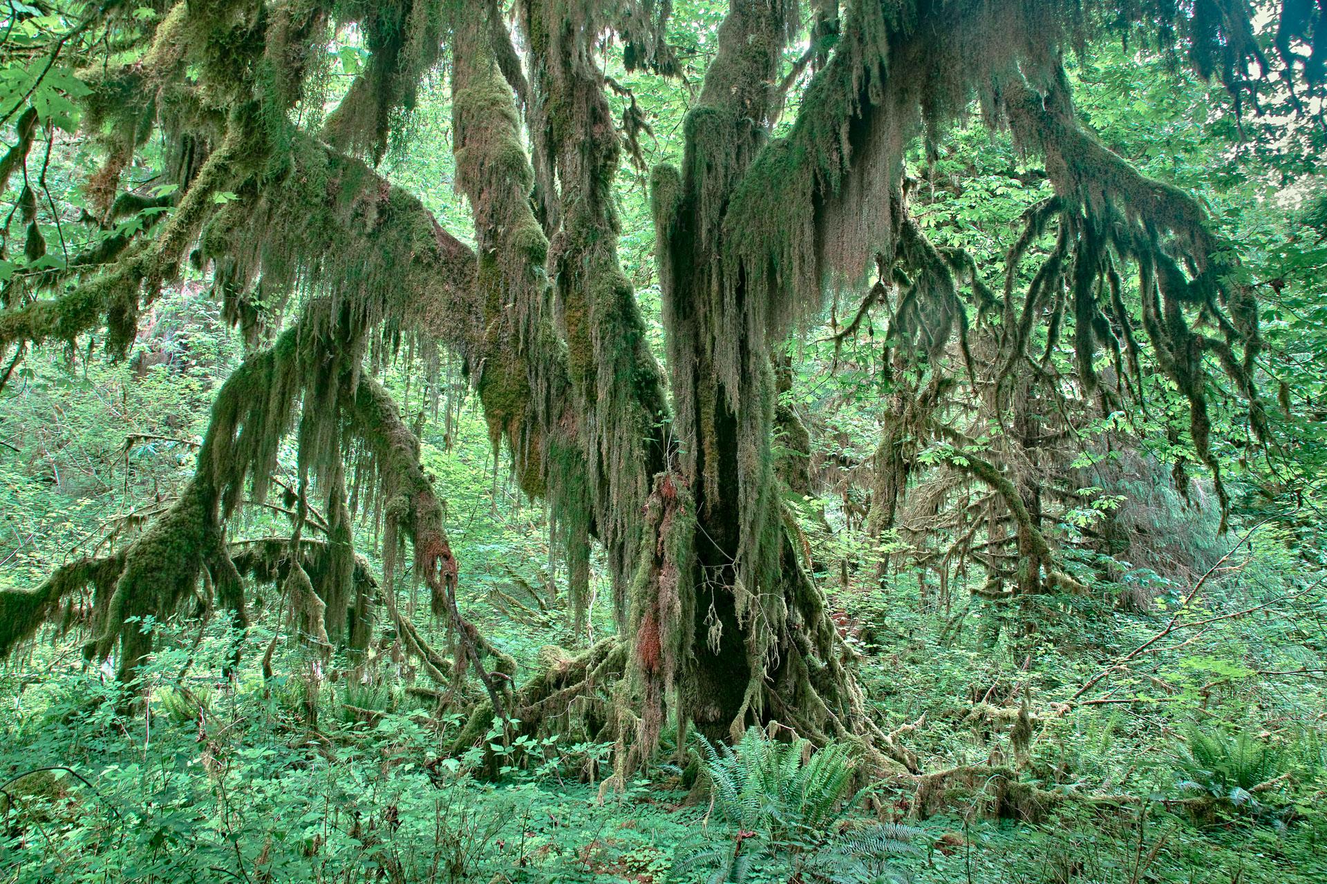 Washington_Oregon_SD-8641.jpg