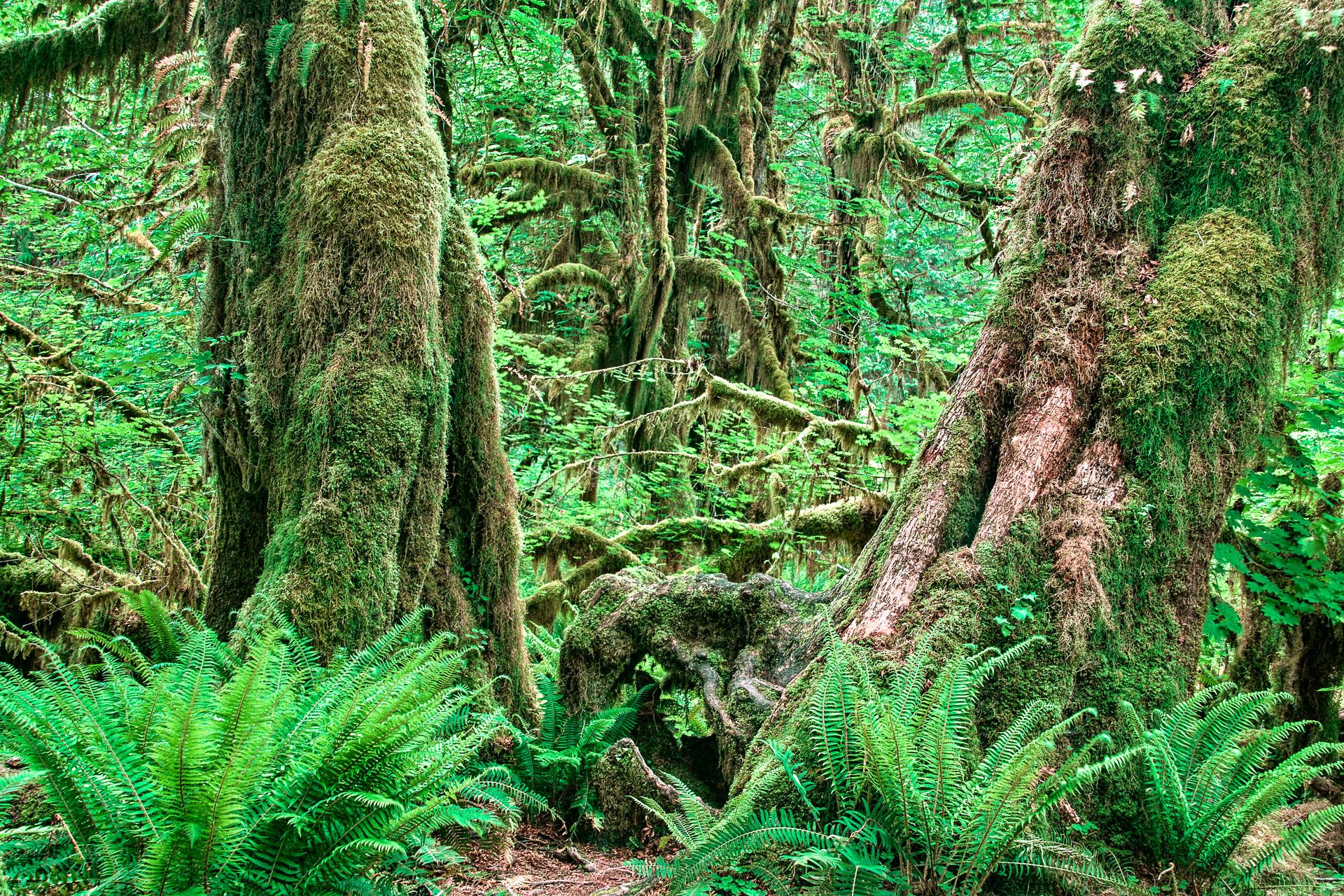Washington_Oregon_SD-8684.jpg